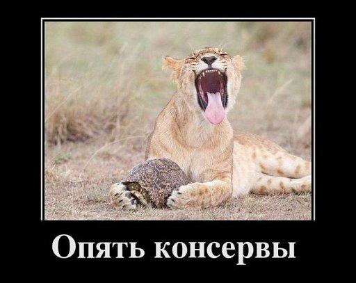 512_6959289e13da46demot0492.jpg