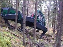 Pełzacz leśny