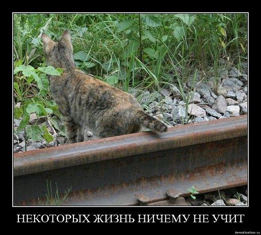 [Obrazek: 512_35db1b79demot79.jpg]