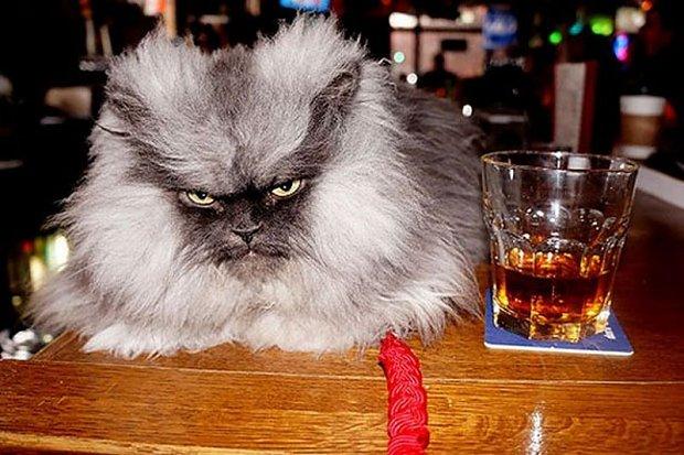 5 Kotów Zarabiających Na Swoich Właścicieli Joe Monster