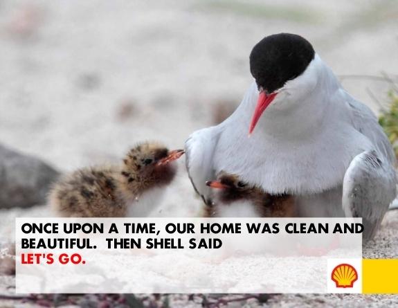 shell_17