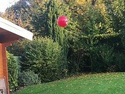 Para psów nie pozwala, by balonik spadł na ziemię