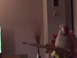 Papuga maszynowa