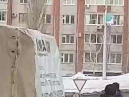 Płoszenie łosia w Rosji