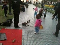 Psi lalkarz